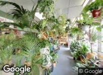 Plant Peddler