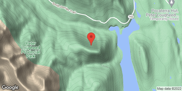 Gypsum Ridge - Black Bear sighted