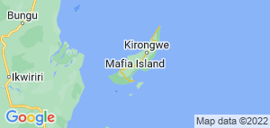 Svøm med hvalhajen. 8 dage Tanzania