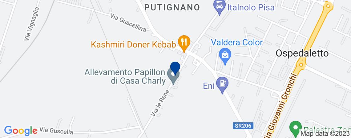 Appartamento 5 o più locali, PISA